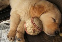 Let sleeping dogs lie!!!! / If a dog is sleeping, leave it the hell alone for crying out loud!!!! / by Shelley Lester