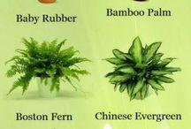 Növénykékről