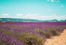 Alpes-Haute-Provence