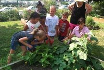 Community Gardens / Community gardens allow individuals and families without land of their own the opportunity to enjoy gardening and grow their own vegetables and fruits... Community gardens contribute to food security and alleviate hunger with thousands of pounds of food being donated to food pantries and communities in need each year...