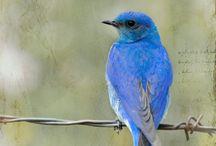 kuşlar / birds