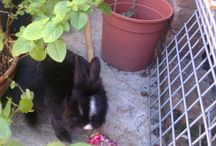 Conigli - Bunnies