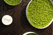 Green wall circles