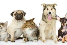 Pet Care and Safety / All the resources dog, cat, and even hamster owners need to raise happy, healthy pets