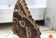 Butterflies / by Charlene Hornbaker Mulcahy