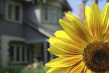 Spring Home buying season