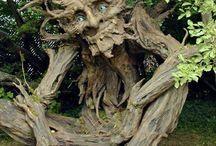 najstarsie stromy na svete