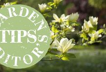 Gardening / Discover your green thumb with these gardening ideas and tips!