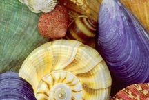 Shells  / by Linda Reyes-Alicea