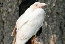 вороны, птицы