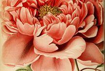 Декупаж цветы картинки