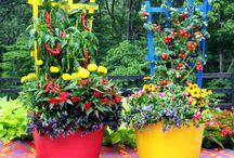 Container Gardens - Aarons Outdoor Pots!