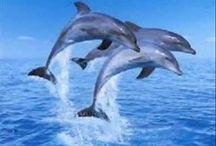 Dolphin Love / I researched dolphin behavior for my book Wai-nani: A Voice from Old Hawaii. I love there energy, grace and intelligence and made Eku, a male bottlenose dolphin, Wai-nani's best friend www.lindaballouauthor.com
