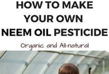 Neem Oil how to make