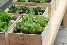 Gardening - Organic Veg / by Mirko Spinella