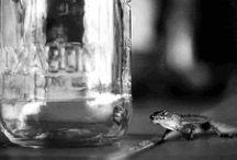 Gecko, Lizards