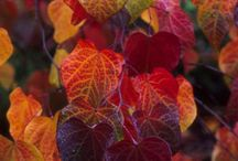 Autumn / by Linda Bohm