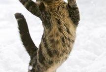 meow's