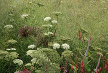 plants / by Shanti Levy