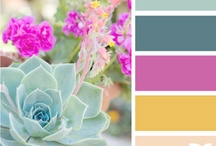 Color Palettes / by Amy Priddy