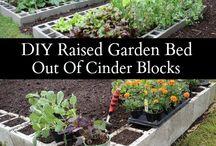 vegies garden