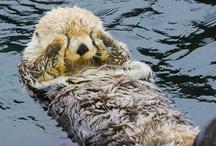 Sea Otters ♥