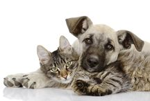 Our Blogs / Pet related articles from our very own Prairie Ridge Blog.
