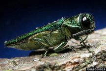 Tree Pests and Diseases / It's important to understand the underlying cause when a tree problem exists. An insect or disease infestation may be just superficial or could cause serious damage.
