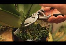 orchids replant