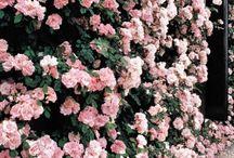 Vintageeee, love pink