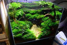 Aquarium akwarium