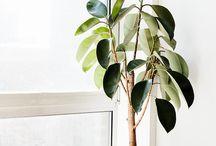 plants / by Rhonda Rindels McKibben