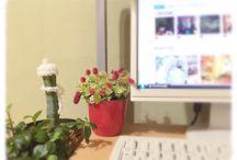 入賞作品「FlowerBizプロジェクト!職場を花・緑で飾ろうコンテスト」 / http://greensnap.jp/contest/29