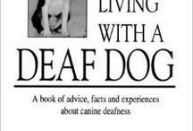 Colin, Deaf Dog