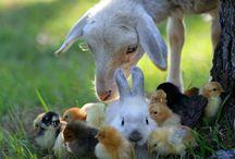 72. Vriendschap tussen en met dieren. / LOVE