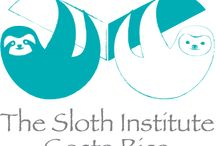 The Sloth Institute #slothlove / The Sloth Institute is a wildlife rescue center in Costa Rica, dedicated to research and rehabilitation of sloths.