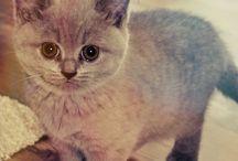 Cats / http://www.fotozive.cz/