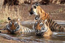 Badrama Wildlife Sanctuary in Odisha