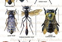 Insekty - inspiracje