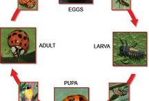7-) Bahçeye Yararlı Canlılar