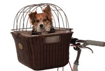 Take me with you! / Around the world and back again - how to travel comfortably and safely with your pet.