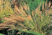 la taille des plants avant l'hiver