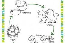 Animal Life cycle worksheets