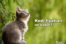 Kediler Hakkında Bilgiler / Petcim üzerinde kedi türleri ile ilgili makale ve görseller.