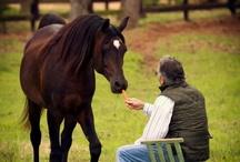Horses*-*❤