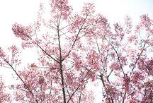 BOTANICAL MARKET  -2015 spring- / 開催日:2015年3月28日(土)29日(日) 場所:勝山公園大芝生広場(福岡県北九州市小倉北区)  これからの循環型社会を支える、無限のパワーを持った再生可能資源「植物」。   植物そのものや、植物由来の品々やサービス、オーガニック、ナチュラル、ロハス製品をはじめ、木材や紙、木綿や精油、植物デザインのものまで「ボタニカル」がキーワードのマーケットです。  植物の持つ力や美しさを毎日の生活に取り入れ、心豊かに満たされるライフスタイルを叶えます。