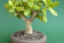 Pflanzen: Ideen für draußen und drinnen