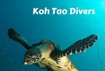 Diving in Thailand / Thailand has some of the best secrets under the surface of our crystal clear turquoise waters. Koh Phangan and neighbouring Koh Tao are known to be some of the best dive spots in the world!