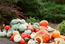 for the love of fall. / fall decor and fall projects. thanksgiving. / by Jennifer {StudioJRU}