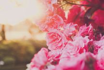 NZ Flower Week